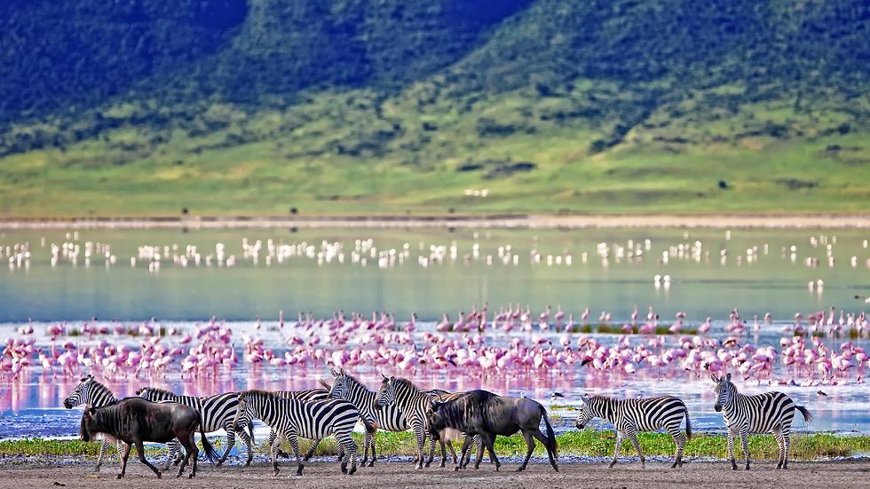 נפגוש כמויות עצומות של בעלי חיים במכתש המופלא: נגורונגורו (צילום: shutterstock)
