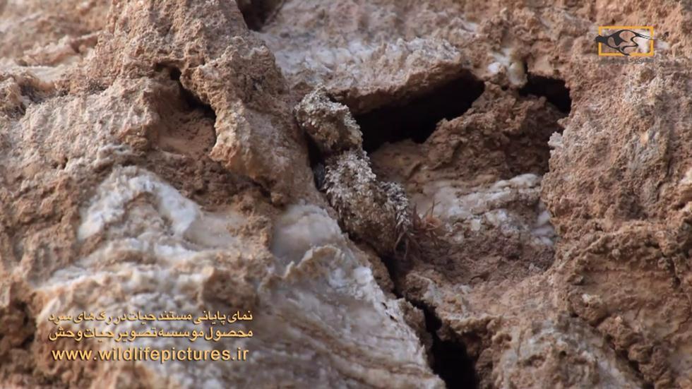 (צילום: fatolah amiri  /  wildlifepictures.ir) (צילום: fatolah amiri  /  wildlifepictures.ir)
