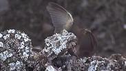 צילום: fatolah amiri  /  wildlifepictures.ir
