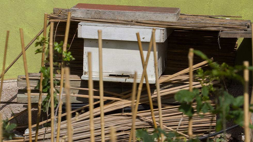 גם דבורים יש על הגג (צילום: עידו ארז) (צילום: עידו ארז)