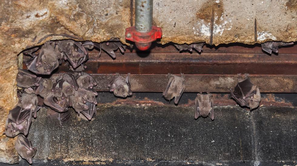 העטלפים של הסנטר. יוצאים לאכול בתל אביב (צילום: עידו ארז) (צילום: עידו ארז)