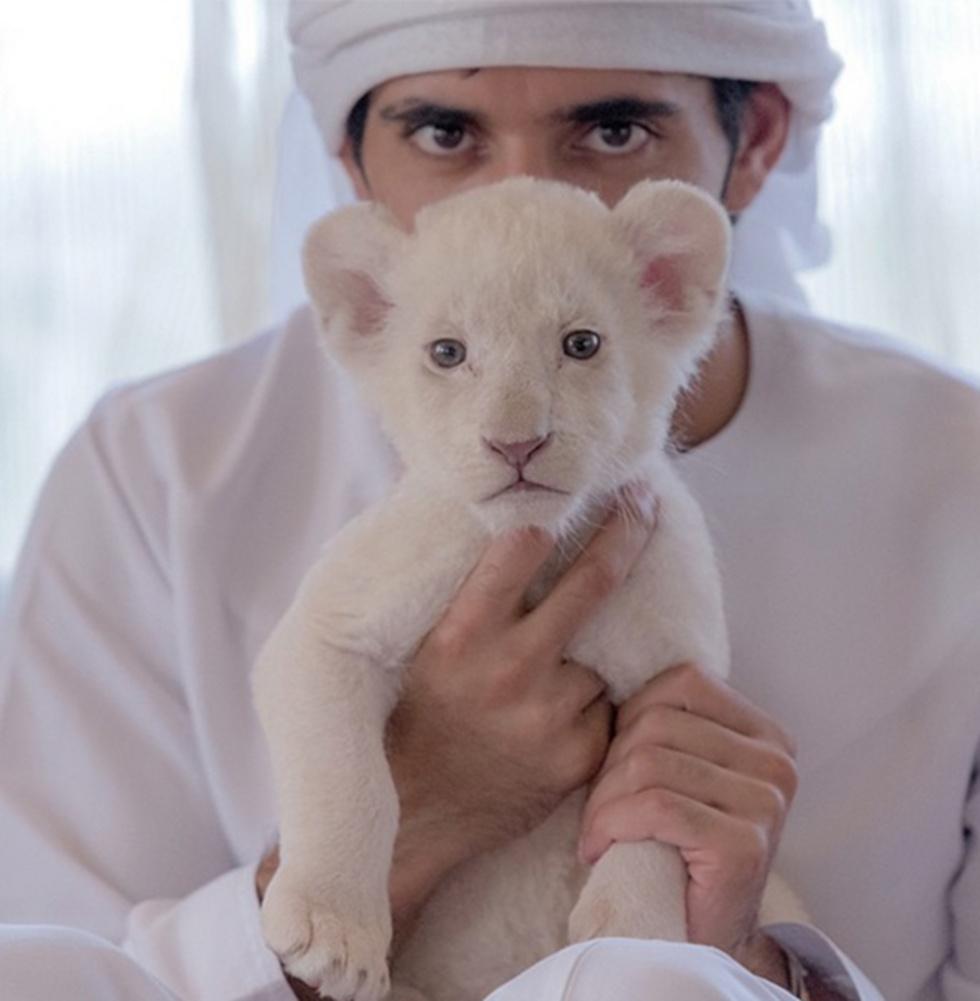 עם אריה קטן. כל התמונות - מתוך חשבון האינסטגרם של הנסיך חמדאן ()
