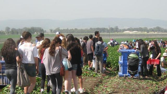 """""""לקט ישראל"""" מציל בימי שיגרה למעלה מ-17 טון תוצרת חקלאית בשנה ומחלק אותה לכ-175,000 נזקקים מדי שבוע ()"""