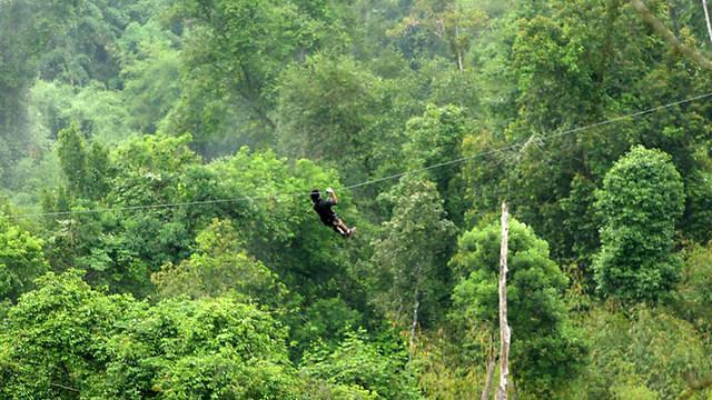 עצים בלאוס (צילום: עינב ברזני) (צילום: עינב ברזני)