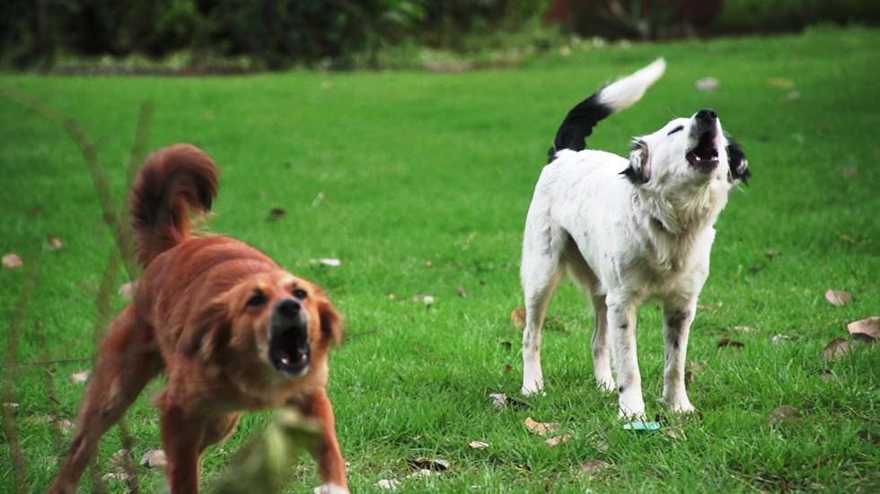 בטיול תפגשו כלבים זרים. זהירות ממריבות ומאבקי כוח (צילום: ארז ארליכמן)