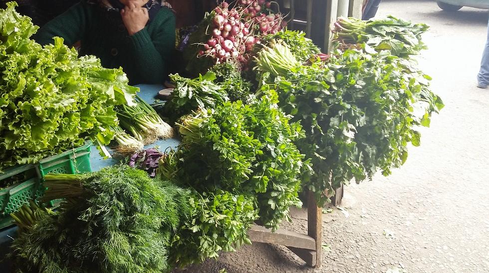 בכל ארוחה יגישו לכם צלחת ירוקים טריים (צילום: מור אלזון) (צילום: מור אלזון)