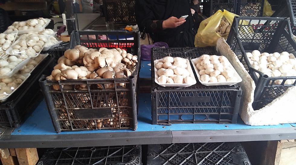כל סוגי הפטריות (צילום: מור אלזון) (צילום: מור אלזון)