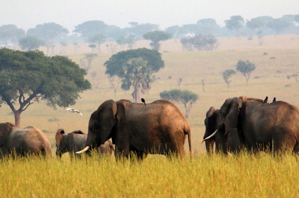 חיות היער הגדולות בסבך שיחי העשב (צילום: גילי חסקין) (צילום: גילי חסקין)