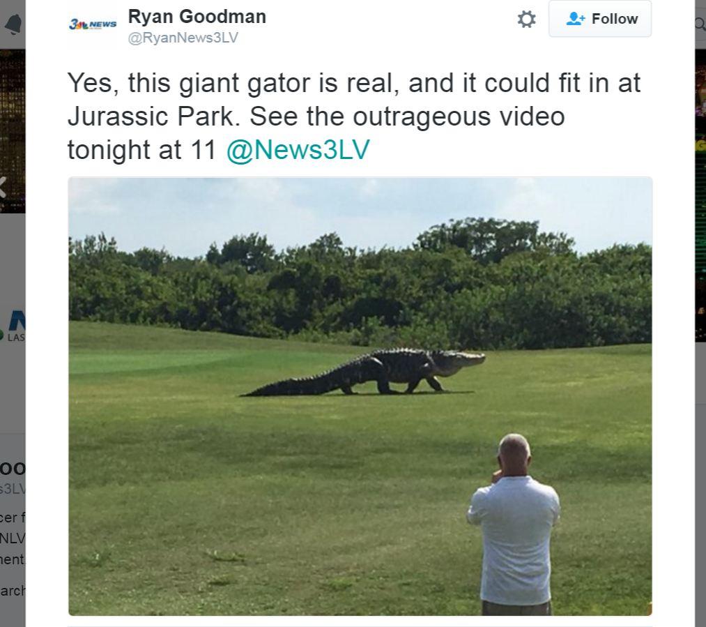 (צילום מסך: טוויטר @RyanNews3LV) (צילום מסך: טוויטר @RyanNews3LV)
