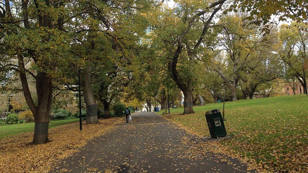 להירגע בפארק באמצע העיר (צילום: גל ניירנס) (צילום: גל נירנס) (צילום: גל נירנס)