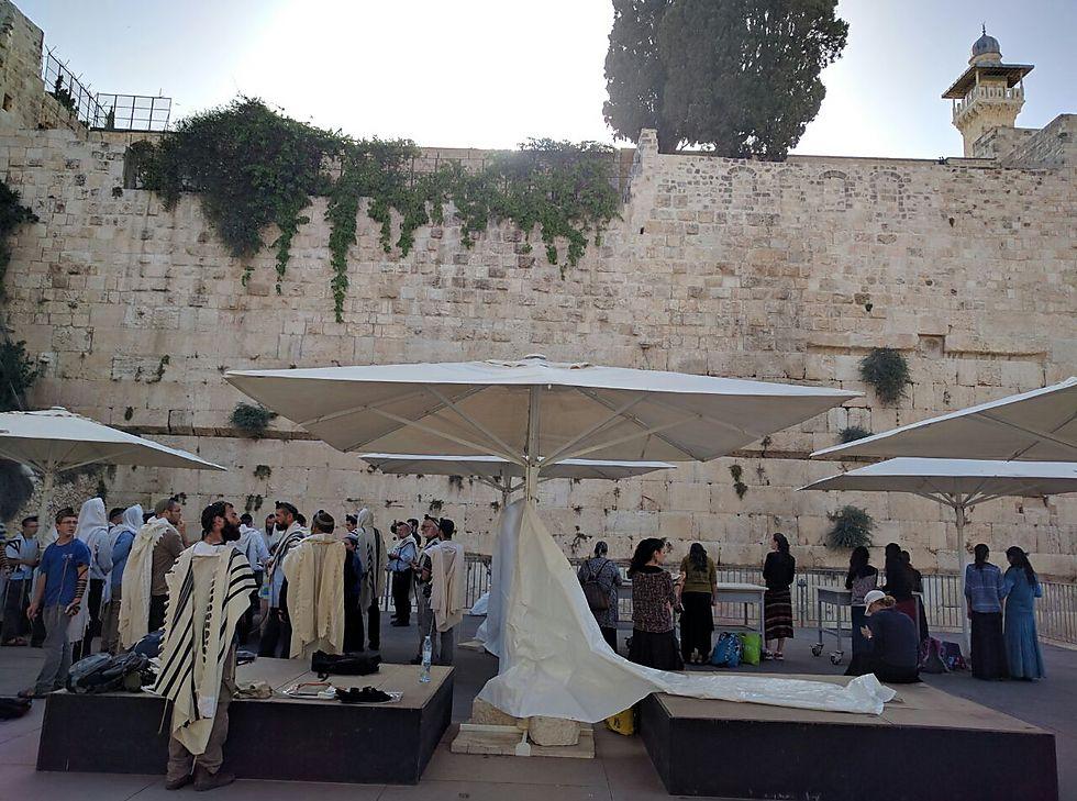 עזרת ישראל (צילום: דותן גואטה) (צילום: דותן גואטה)