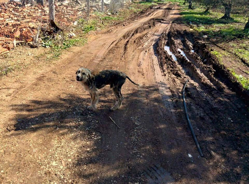 טראפלס בתחילת השנה. משוטט בשדות הגליל מפוחד ורעב (צילום: אסופים)