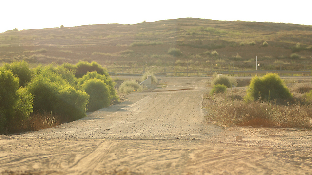 (צילום: רועי עידן)