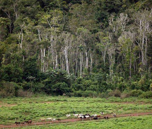 כורתים יערות עבור מרעה. ארכיון (צילום: רויטרס)