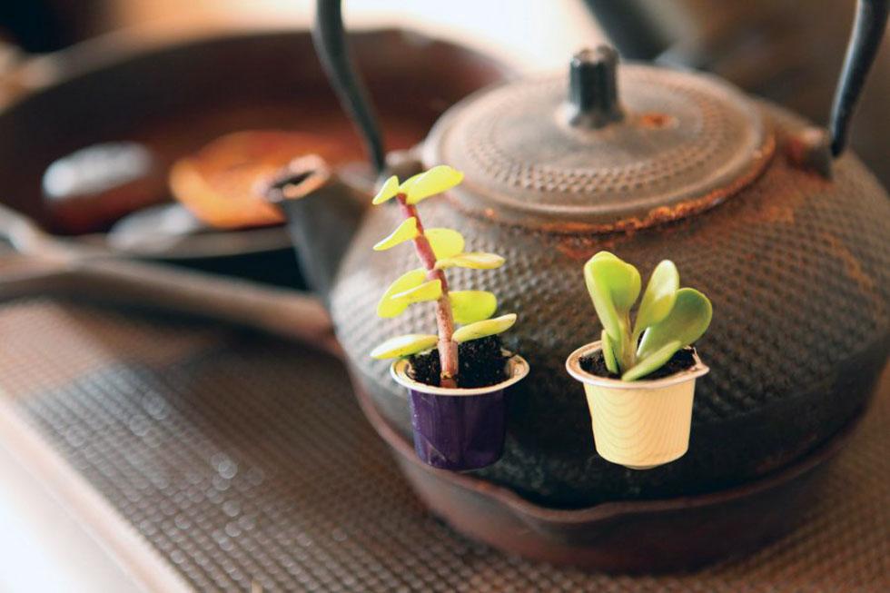 עציץ מגנטי מקפסולת קפה (צילום: אמיר פרג', הסטודיו של אמיר)