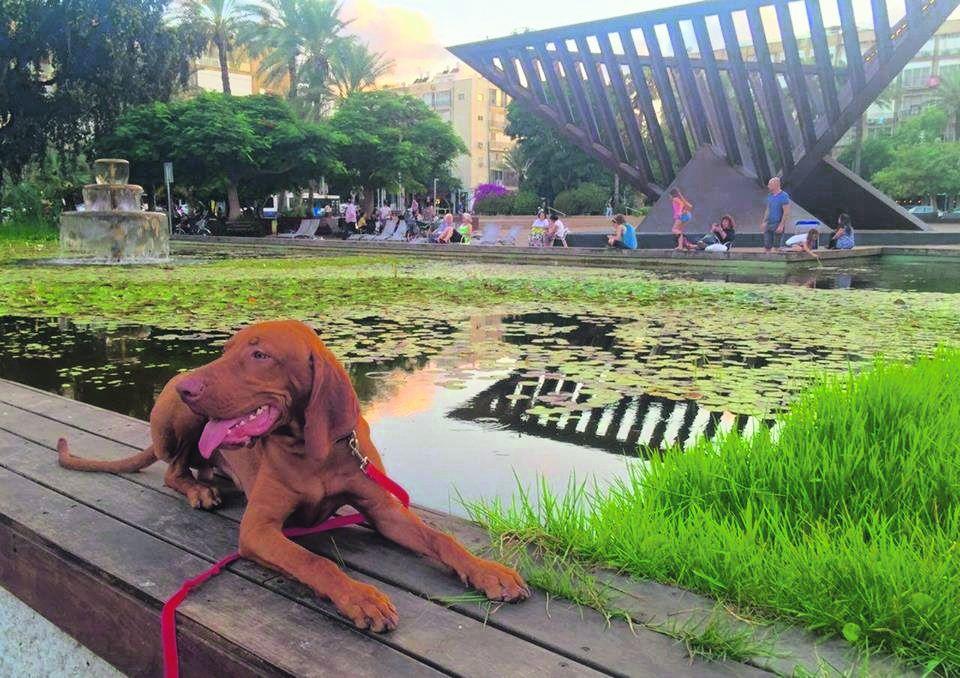 הכלב ריצ'רד בכיכר רבין בתל אביב. מחכים לתוצאות הנתיחה
