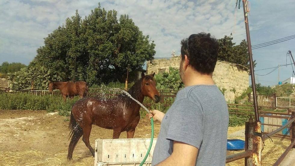 מקבל שטיפה. סוס המתנה של המשפחה (צילום: אוסף משפחתי) (צילום: אוסף משפחתי)