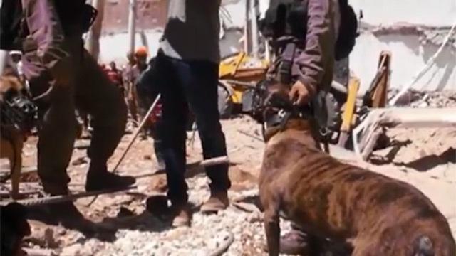 כלבי יחידת עוקץ בשטח ()