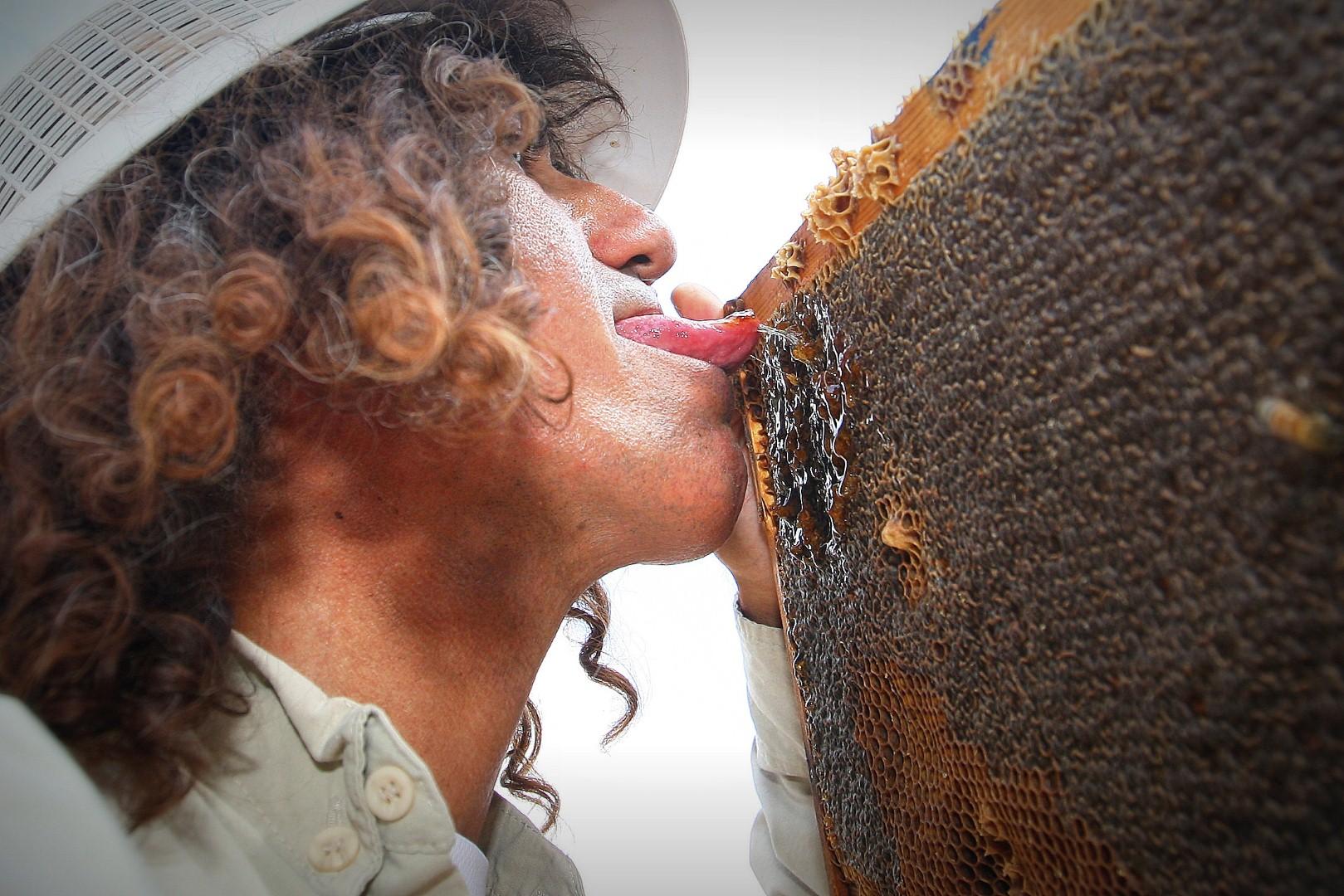 מחובר לדבורים - יצחק אלבז מלקק דבש (צילום: רועי עידן)