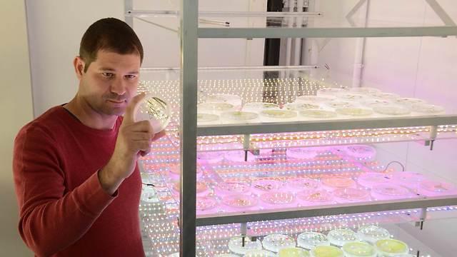ראש המעבדה ד״ר יפתח יעקובי בוחן צלחת פטרי המכילה מיקרו אצות מהונדסות. (צילום: באדיבות אוניברסיטת תל אביב) (צילום: באדיבות אוניברסיטת תל אביב)