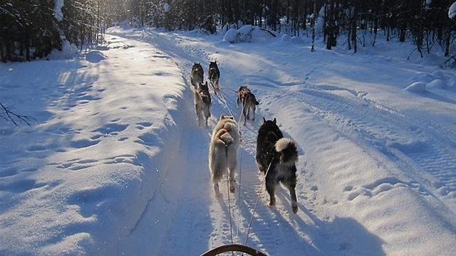 דמיינו שישה כלבים האסקים מובילים מזחלת עץ, שועטים קדימה בדהרה, אז אני לא צריך לדמיין את זה. (צילום: גבי הקר )