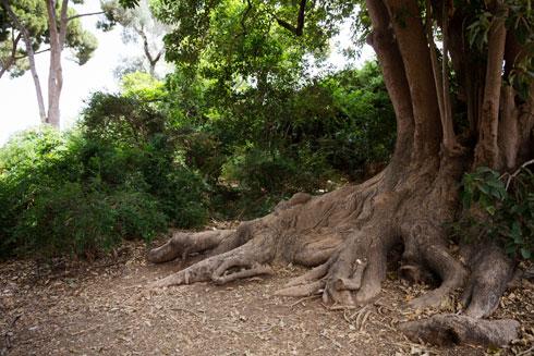 רגעי קסם בגן, שעדיין אפשר וצריך להציל (צילום: דור נבו)