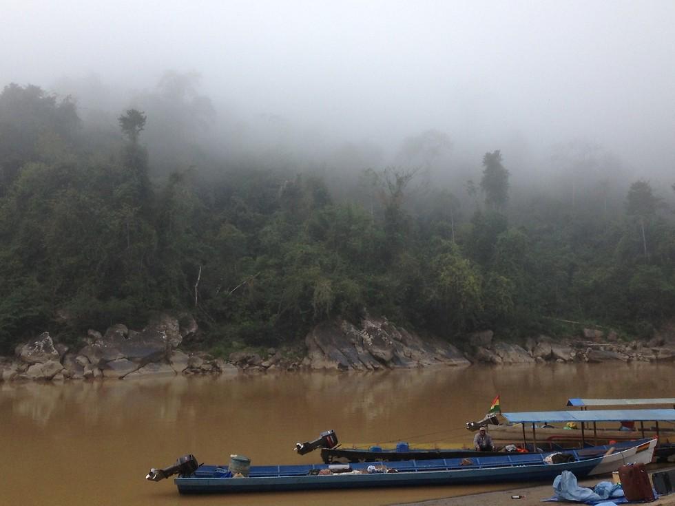 ערפל של בוקר בג'ונגל (צילום: ניר פדרבוש)