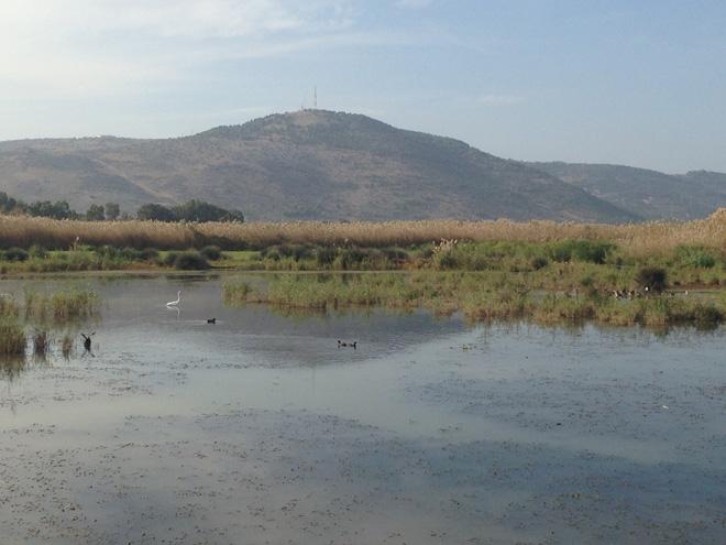 שמורת הטבע החולה: צמחי מים, עופות וצבים (צילום: עינב לנדאו)