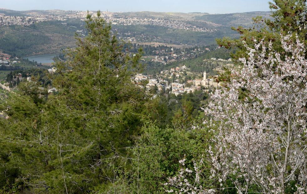"""העלייה לירושלים היא חלק בלתי נפרד מהאתוס של הקמת המדינה. אלא שהיערות מאוימים ע''י פרויקטי נדל''ן, והעלייה הפכה למשהו אחר לגמרי (צילום: לע""""מ)"""
