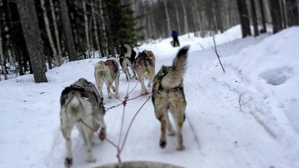 כשהקרח עף לך על הפנים. נסיעה במזחלות שלג (צילום: סמדר יגר) (צילום: סמדר יגר)