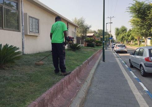 איך נכון לכסח דשא? המדריך המרתק לגינון עירוני נכון (צילום: זווית)