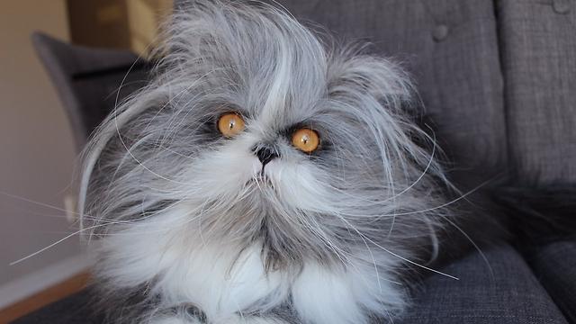 חתול עם עיניים מלחיצות (צילום מתוך טוויטר)