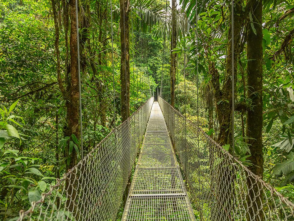לטייל על גשרים ואומגות בין יערות וג'ונגלים פראיים ()