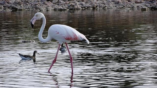 (צילום: דב גרינבלט, החברה להגנת הטבע)