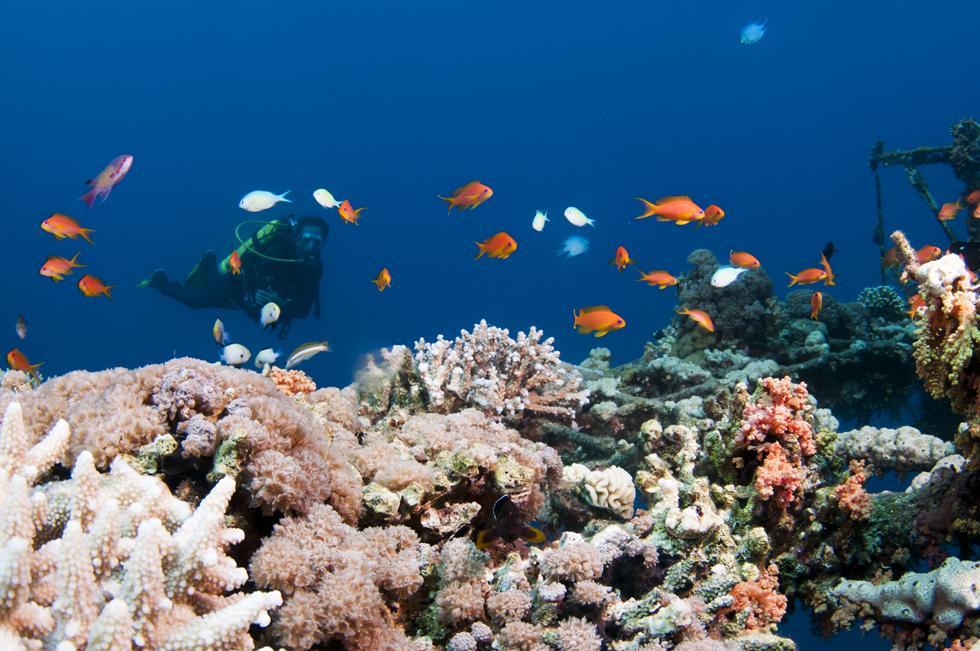 ריף נוסף של אלמוגים משגשג בחלק הדרומי של המימשה (צילום:חגי נתיב)