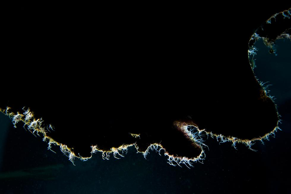 קוי המתאר של הפרוג-פיש מהצד בהארה אחורית (צילום:חגי נתיב)