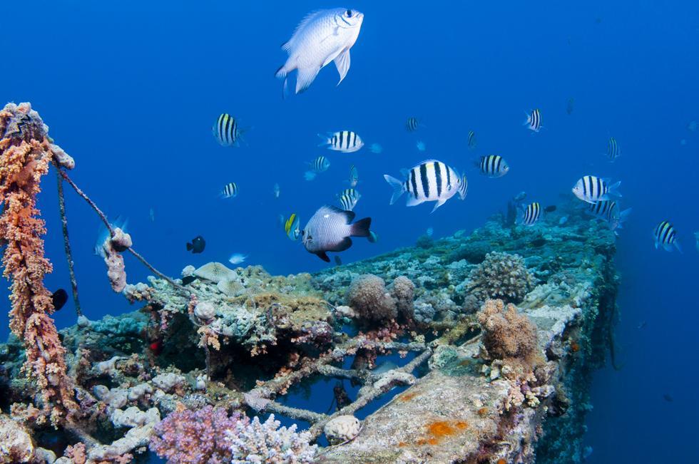 ריף אלמוגים משגשג בחלקו הדרומי של המימשה (צילום:חגי נתיב)