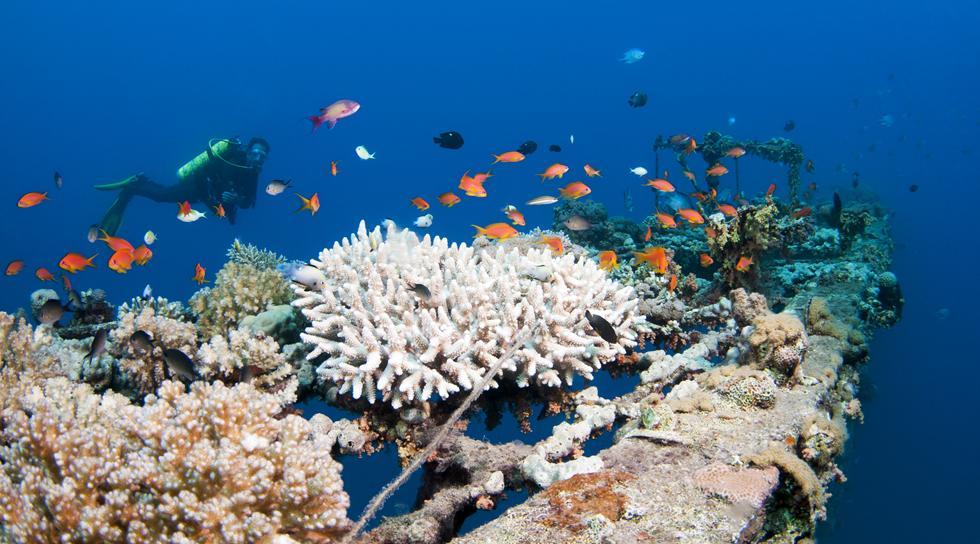 ריף אלמוגים משגשג בעומק של 10 מטרים בחלקו הדרומי של המימשה (צילום:חגי נתיב)