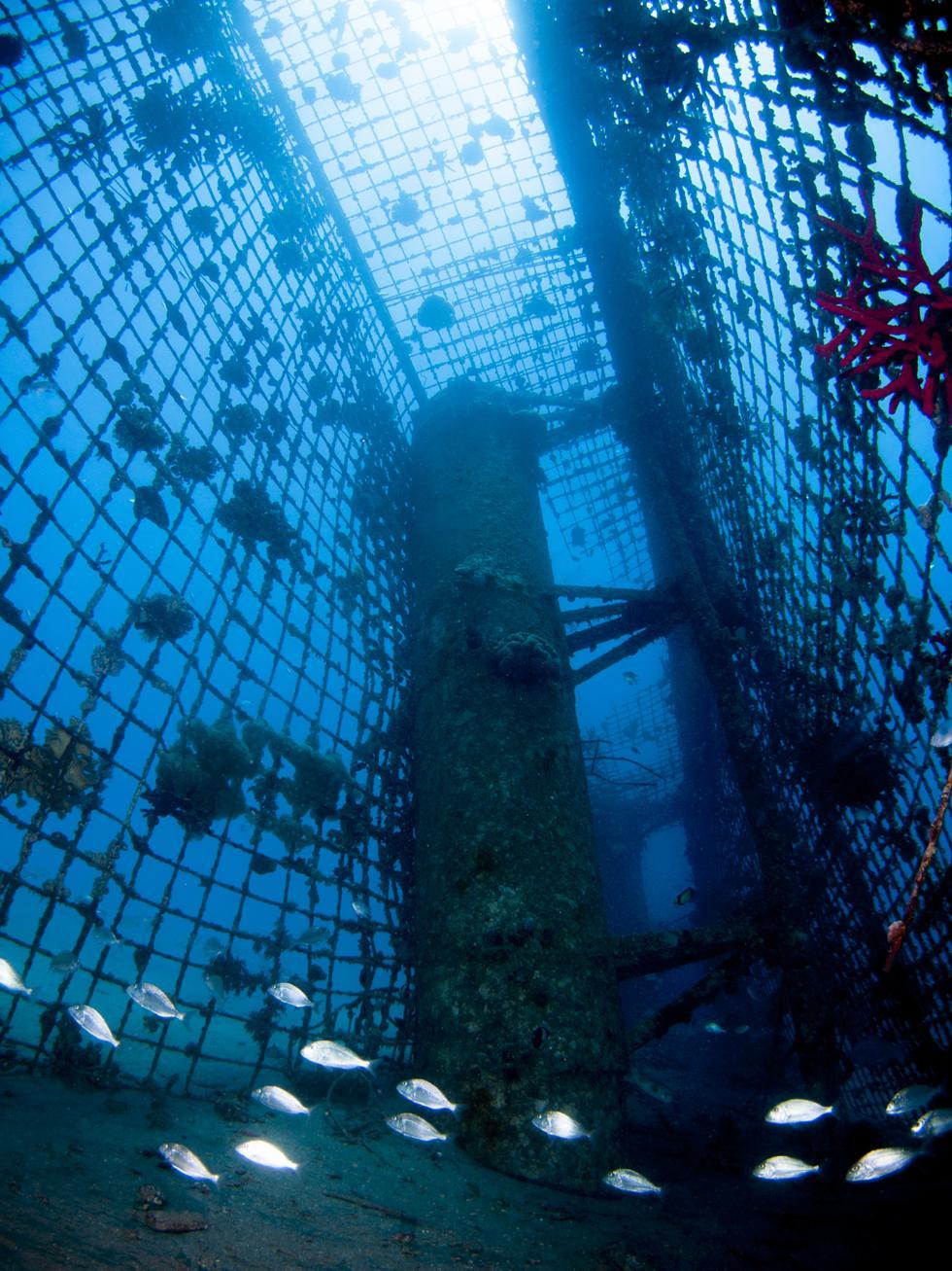 להקת דניסים, שהגיעו מכלובי הדגים שפעם היו במפרץ, התאקלמו במבנים המורכבים שבפתח המעגן (צילום:חגי נתיב)