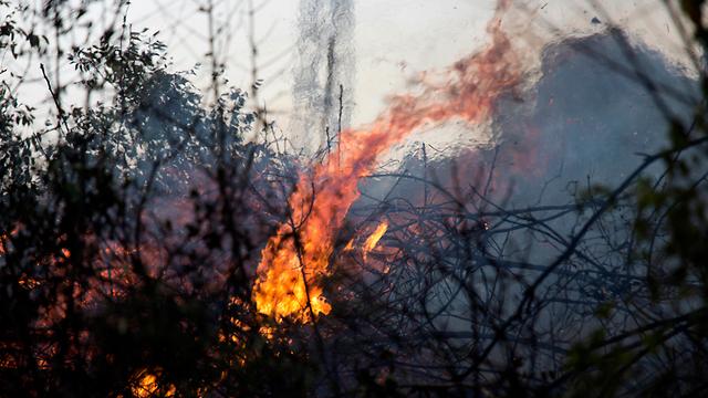 השריפה בזכרון יעקב (צילום: AP) (צילום: AP)