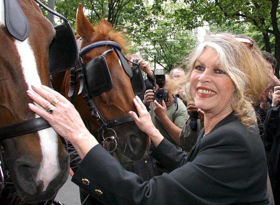 מקדישה את חייה למאבק למען זכויות בעלי חיים, ובמקביל אחראית למספר פליטות פה מביכות בנוגע להומוסקסואלים, מהגרים מוסלמים ופליטים המגיעים לאירופה (צילום: rex/asap creative)