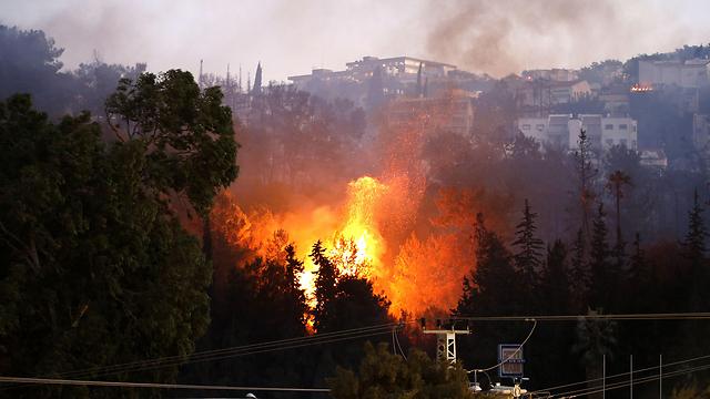 השריפה בחיפה ב-2016 (צילום: AFP) (צילום: AFP)