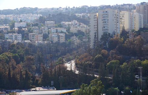 תעתועי האקלים משנים את המציאות. צריך להכיר בכך, ולא רק בחיפה (צילום: גיא שחר)