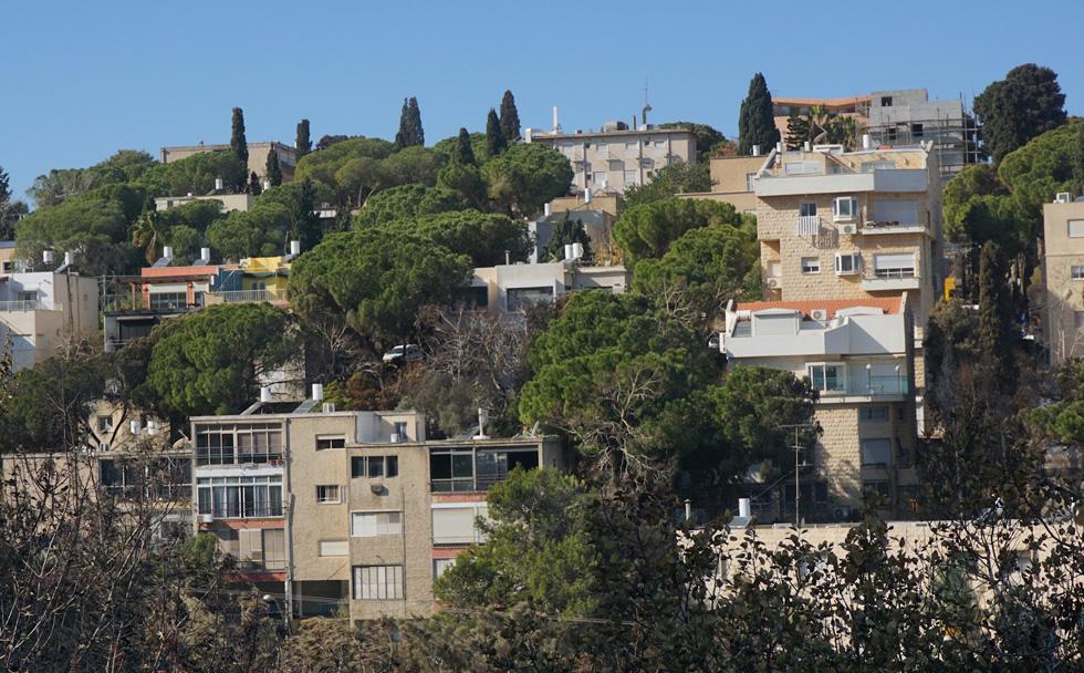 חיים בתוך עצים. בחיפה, הבניינים והצמחייה שלובים זה בזה, ויוצרים את כיסי הירק הייחודים לה (צילום: גיא שחר)