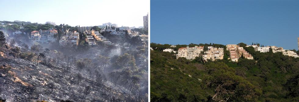 נחל אחוזה, לפני ואחרי השריפה. האחריות מוטלת גם על בעלי הבתים: לכרות את העצים היבשים. הרשויות צריכות לפקח על כך (צילום: גיא שחר)