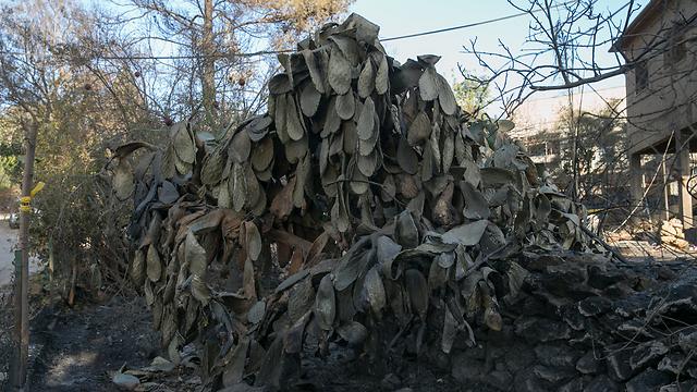 יבש ושחון. נזקי השריפות בחודש נובמבר במושב בית מאיר (צילום: אוהד צויגנברג ) (צילום: אוהד צויגנברג )