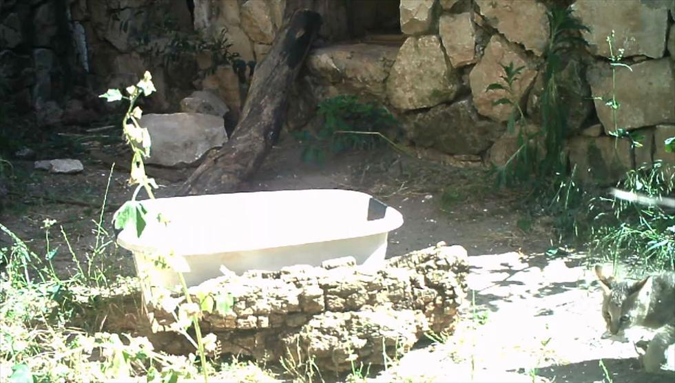 """(צילום: גן החיות התנכ""""י ירושלים) (צילום: גן החיות התנכ"""