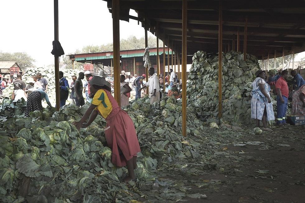 תוצרת חקלאית בזימבבואה (צילום: Gettyimages)