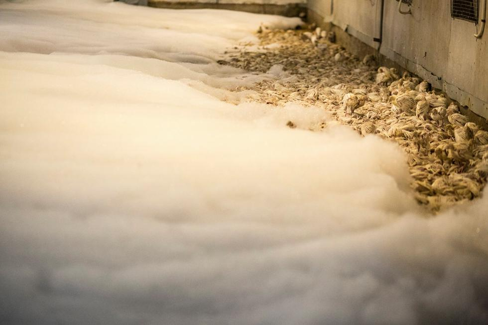 (צילום: רועי שפרניק) (צילום: רועי שפרניק)