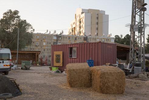 בשכונה ג' יש יוזמות קהילתיות שונות, בהן גינה קהילתית משגשגת (צילום: דור נבו)